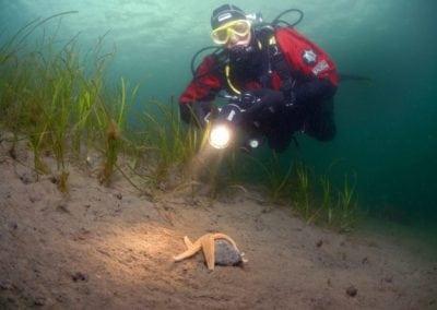Taucher-über-Seestern