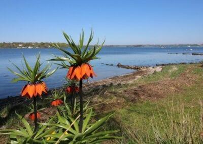 Sonniger Frühjahrstag am Koldingfjord: eine absolute Top-Meerforellenzeit!