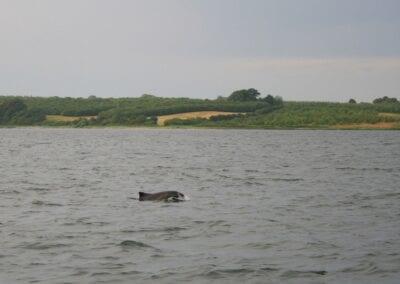 Beim Bootsangeln fast garantiert: Schweinswal-Sichtungen