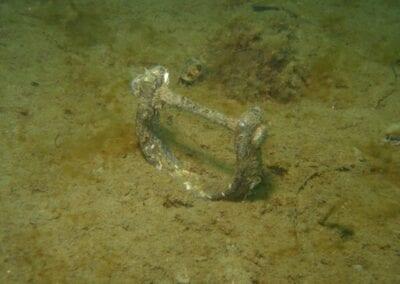 schaekel-beim-tauchen-shackles-underwater