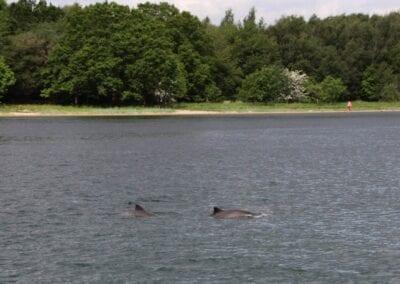 Urlaub bei Gl. Ålbo: Sommer, Sonne, Schweinswale