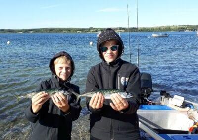 Getigerte Sommergäste: Auch Makrelen ziehen vorm Campingplatz vorbei!